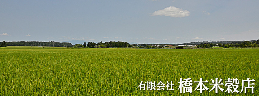 比良山系から流れ出る自然水を利用した安心安全のこだわり米。
